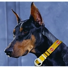 CL-605 - Man's Best Friend Dog Collar